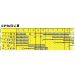台木用トマト 助人 100粒 カネコ種苗|green-loft|04