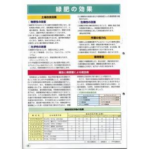 緑肥 ソルガム ファインソルゴー(イネ科)1kg カネコ種苗株式会社 green-loft 03