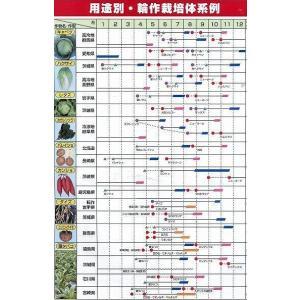 緑肥 ソルガム ファインソルゴー(イネ科)1kg カネコ種苗株式会社 green-loft 05