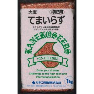 緑肥 てまいらず(イネ科)1kg カネコ種苗株式会社 green-loft