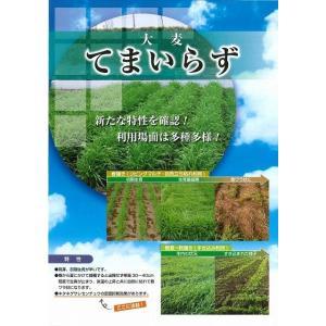 緑肥 てまいらず(イネ科)1kg カネコ種苗株式会社 green-loft 02