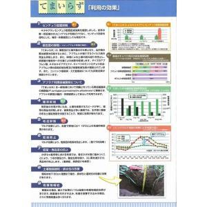 緑肥 てまいらず(イネ科)1kg カネコ種苗株式会社 green-loft 03