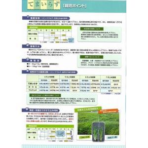 緑肥 てまいらず(イネ科)1kg カネコ種苗株式会社 green-loft 04