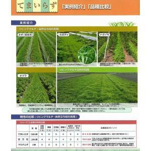 緑肥 てまいらず(イネ科)1kg カネコ種苗株式会社 green-loft 05