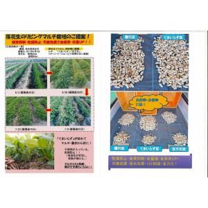 緑肥 てまいらず(イネ科)1kg カネコ種苗株式会社 green-loft 06