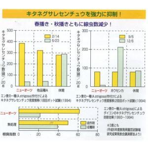 緑肥 ニューオーツ(アウェナストリゴサ) 1kg  カネコ種苗(株)|green-loft|02