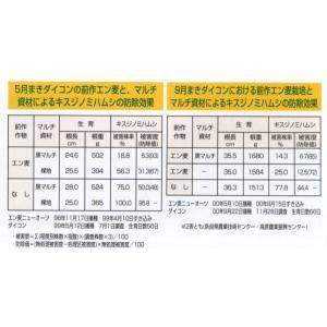 緑肥 ニューオーツ(アウェナストリゴサ) 1kg  カネコ種苗(株)|green-loft|03