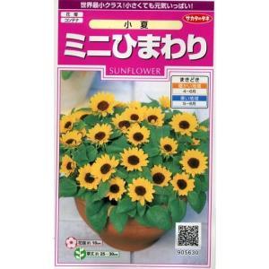 花の種 オール1割引き!ミニひまわり 小夏 小袋  サカタのタネ