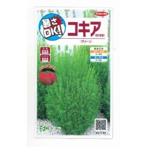 花の種 オール1割引き!コキア(ほうき草)グリーン  小袋 ...
