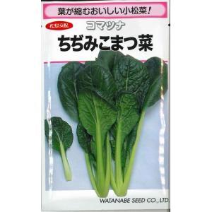 小松菜種  ちぢみこまつな  20ml  松島交配