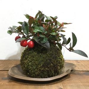 苔玉 チェッカーベリーのコケダマ green-very