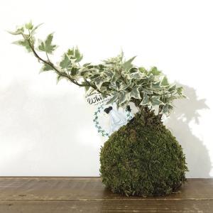 苔玉 ホワイトベールのコケダマ green-very