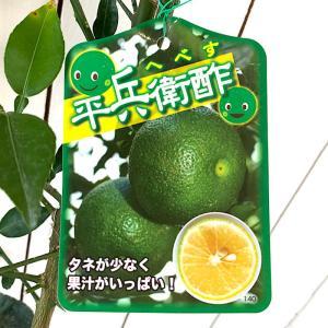 みかん 苗木 平兵衛酢 13.5cmポット苗 へべす ミカン 苗 蜜柑|green-very
