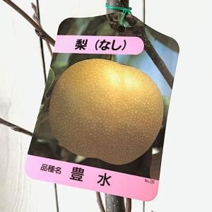 梨 苗木 豊水 12cmポット苗 ほうすい なし 苗 ナシ