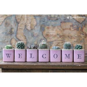 サボテン多肉植物7個セット WELCOMEバージョン|greenfactory