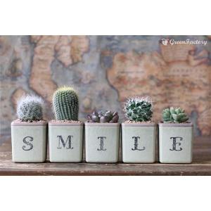 サボテン多肉植物5個セット SMILEバージョン|greenfactory