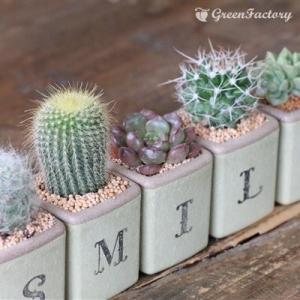 サボテン多肉植物5個セット SMILEバージョン|greenfactory|02
