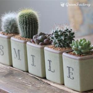 サボテン多肉植物5個セット SMILEバージョン|greenfactory|03