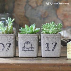 多肉植物3個セット 記念日お入れします。|greenfactory