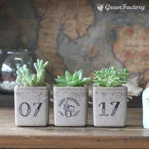 多肉植物3個セット 誕生日お入れします。|greenfactory