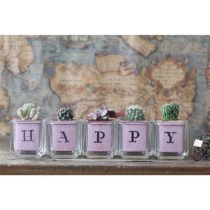 サボテン多肉植物5個セット HAPPYバージョン ガラスキューブ入り|greenfactory