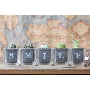 サボテン多肉植物5個セット SMILEバージョン ガラスキューブ入り|greenfactory