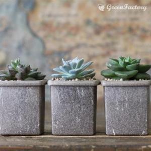 着せ替え用 インナーのみキューブS多肉植物3個セット|greenfactory