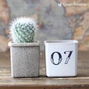 サボテン3個セット 誕生日お入れします。(2)|greenfactory|02