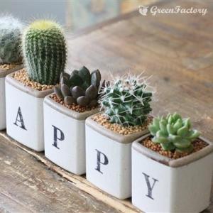 サボテン多肉植物5個セット HAPPYバージョン greenfactory 02