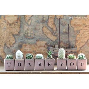 サボテン8個セット THANK YOUバージョン|greenfactory
