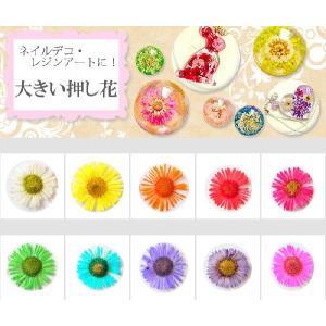 【ジェルネイル】ネイルアート・レジンデコにオススメ♪押し花♪デイジー風♪新色入り10色10個|greenrosenetshopyumi