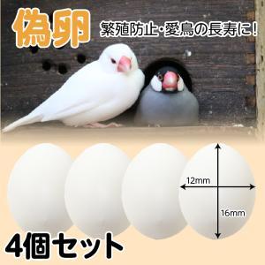 偽卵 4個セット 擬卵 ダミー卵  セキセイインコ 小鳥 繁殖 産卵 抱卵