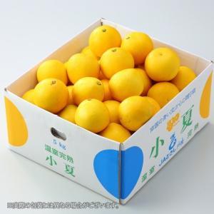 温室完熟 小夏 こなつ 高知県産  L〜Mサイズ 約5kg ギフト 送料無料 みかん