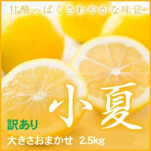 小夏 こなつ 高知県産 風のいたずら ちょっと訳あり 大きさお任せ 約2.5kg 送料無料 みかん