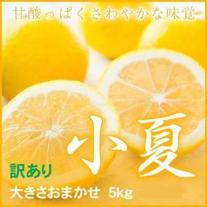 小夏 こなつ 高知県産  風のいたずら(ちょっと訳あり) 大きさおまかせ 約5kg 送料無料  みかん|hachiya-fruits