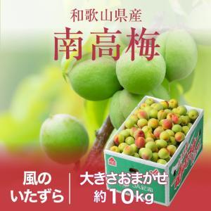 本場、紀州和歌山の高品質な「南高梅」をお届けします。  南高梅は大玉で果肉はとても柔らかく種が小さい...