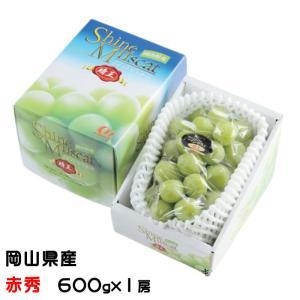 シャインマスカット  晴王  岡山県産 JAおかやま 赤秀 約600g×1 ギフト 送料無料 ぶどう 葡萄 ブドウ