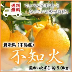 (送料無料) 愛媛県(中島産)『不知火』しらぬひ(デコポンの...
