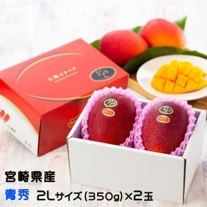 マンゴー 太陽のタマゴ  青秀 2L 350g以上×2玉  JA宮崎経済連 宮崎県産 完熟マンゴー 太陽のたまご 送料無料  ギフト お中元 夏ギフト|hachiya-fruits