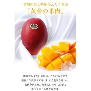 マンゴー 太陽のタマゴ  青秀 2L 350g以上×2玉  JA宮崎経済連 宮崎県産 完熟マンゴー 太陽のたまご 送料無料  ギフト お中元 夏ギフト|hachiya-fruits|04