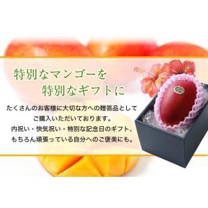 マンゴー 太陽のタマゴ  青秀 2L 350g以上×2玉  JA宮崎経済連 宮崎県産 完熟マンゴー 太陽のたまご 送料無料  ギフト お中元 夏ギフト|hachiya-fruits|07