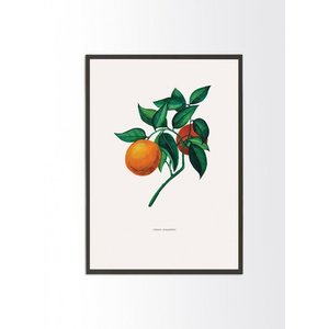 PROJECT NORD | BOTANICAL ORANGE | A3 アートプリント/ポスター|hafen