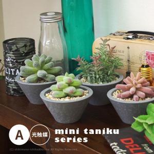 観葉植物 多肉植物 小さい (A) 約8.5〜12cm(ミナモ・フーガ・ポムベル・アストン) ミニ多肉観葉植物 人工観葉植物 造花 フェイク