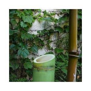 紅茶キャニスター竹缶(100g)|hagurachaya2