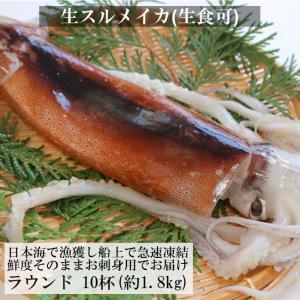 送料無料 日本海産 するめいか (真いか) (生食用) 中型 サイズ 10杯(1.8kg前後) いか...