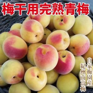 和歌山県みなべ町の自家梅園から収穫した南高梅を梅干しに適した熟度でお届けいたします。是非今年は手作り...