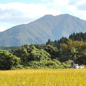 新米 29年 特別栽培米 減農薬 減肥料 鳥取県産 ささにしき 5kg 白米・玄米 谷本さん家のお米シリーズ 送料無料|hakusanmeisui|05
