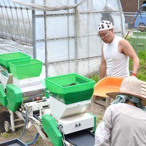 新米 29年 特別栽培米 減農薬 減肥料 鳥取県産 ささにしき 5kg 白米・玄米 谷本さん家のお米シリーズ 送料無料|hakusanmeisui|06