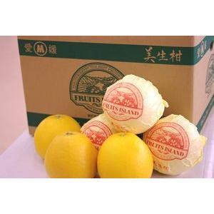 愛媛美生柑(みしょうかん)通販 和製グレープと呼ばれる河内晩柑を販売取寄。約3kg 約6〜約11玉 ...