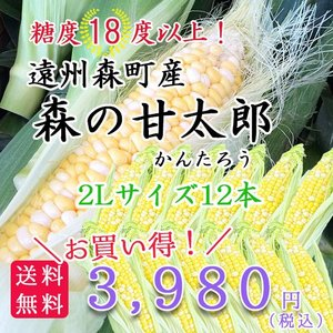 遠州森町産トウモロコシ 「甘太郎(かんたろう)」2Lサイズ12本|hamanako100